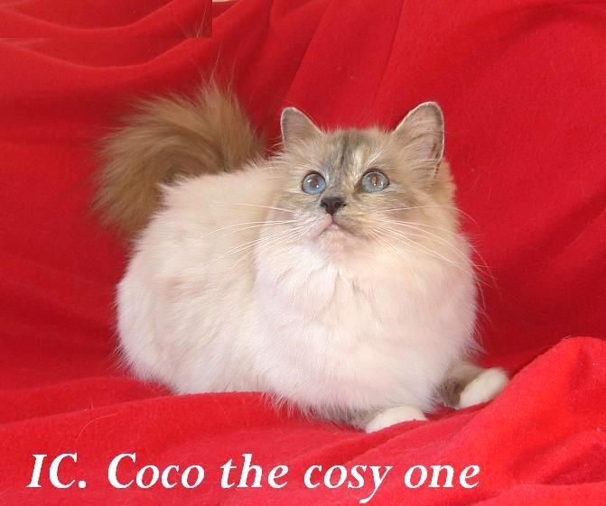 Coco erwachsen