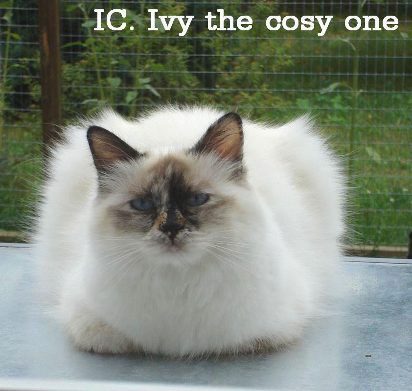 Ivy groß