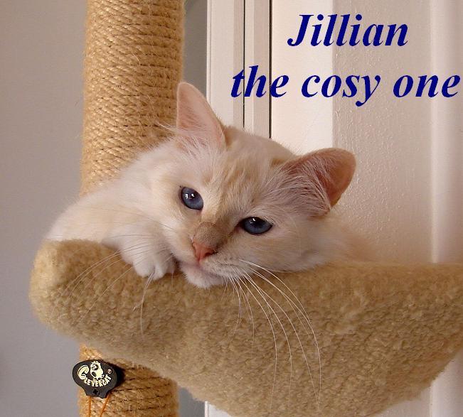 Jillian groß
