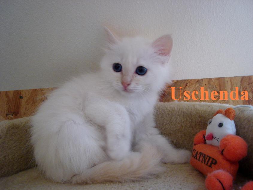 Uschi klein