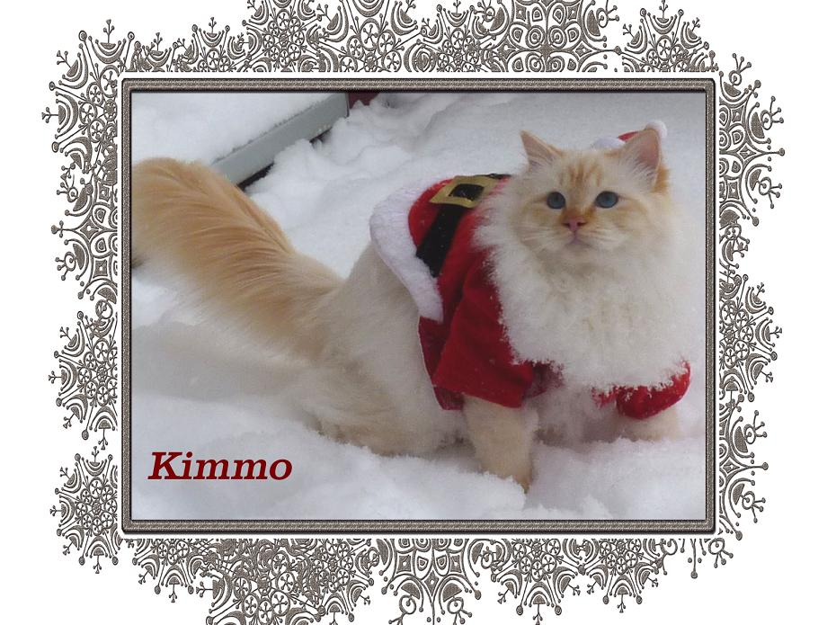Kimmo Schnee