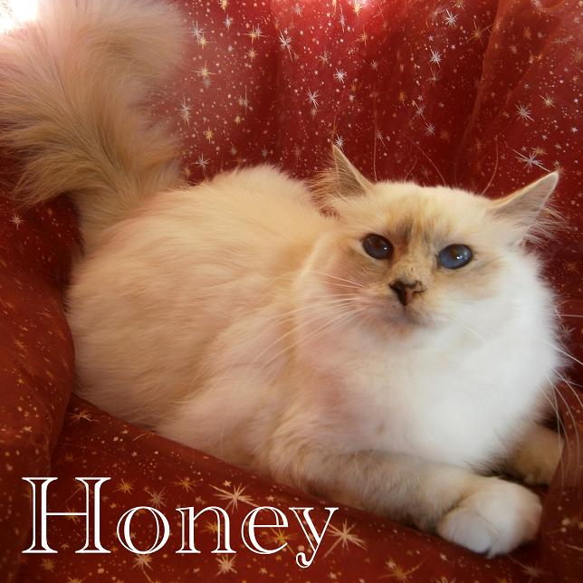 Honey mit 18 Monaten
