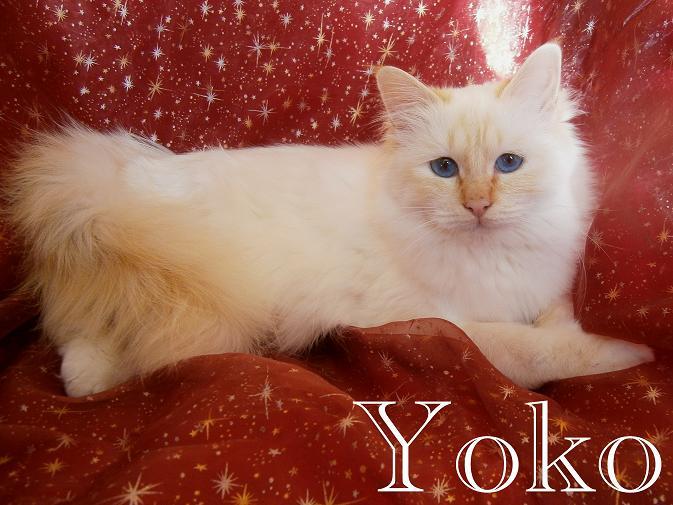 Yoko 11 Mon
