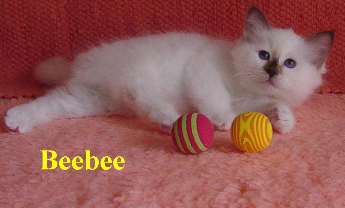 Beebee klein