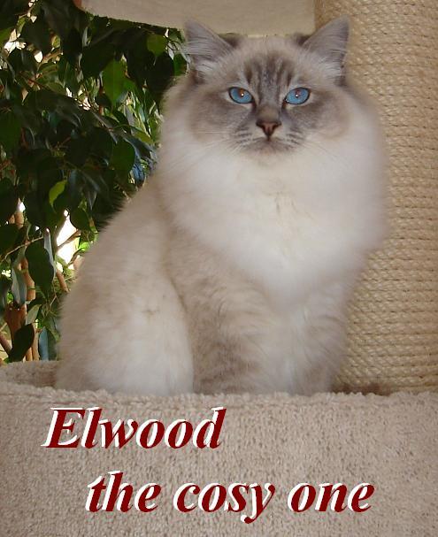 Elwood gro0