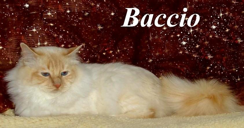 Baccio