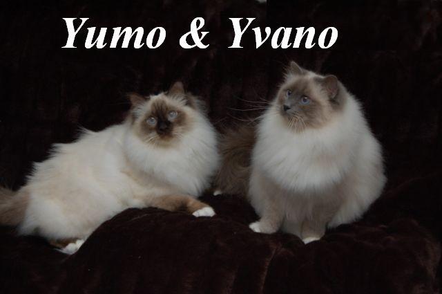 Yumo und Yvano