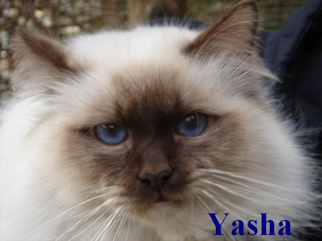 Yasha erwachsen