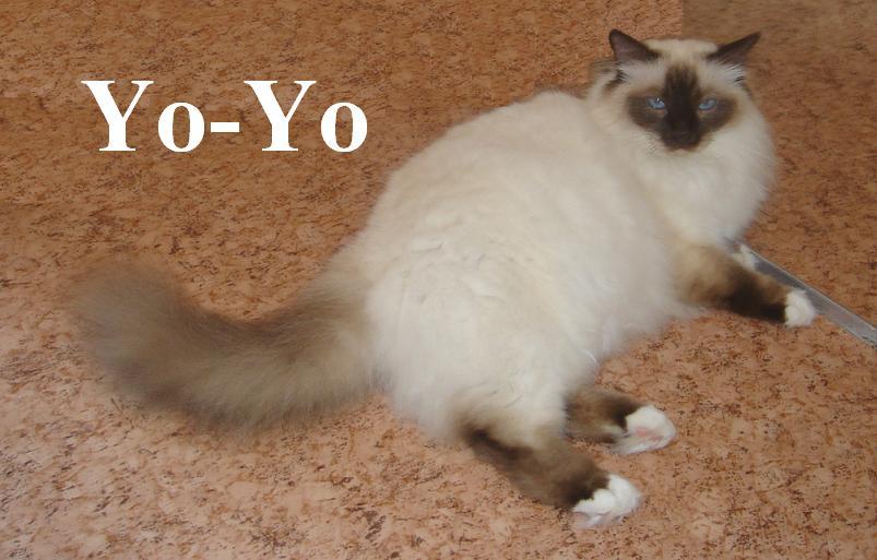 Yoyo groß