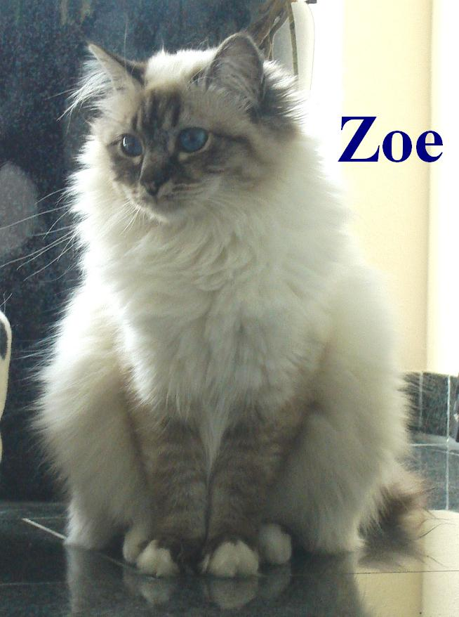 Zoe groß