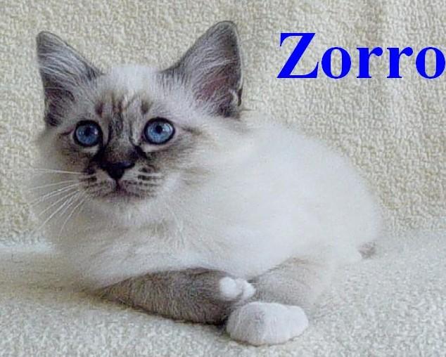 Zorro klein