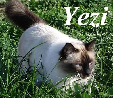 Yezarro erwachsen
