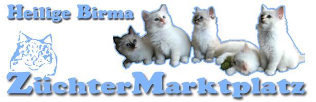 Birma-Kitten und Katzen zu verkaufen